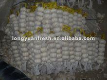 china fresh garlic price 2012