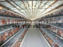 modern tasarım otomatik tavuk besleme sistemi
