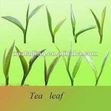 Camellia extract 95% Tea saponin