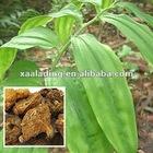 Polygonatum kingianum P.E-Solomonseal Rhizome