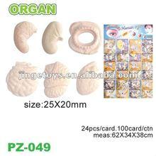 Magic growing organ
