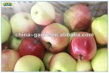 Shanxi Red Gala Apple 2012 New Crop