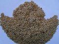 Graines de lin de Brown à vendre