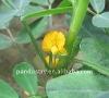 IBA 98% tc indole 3 butyric acid foliar fertilizer