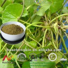 ISO&Kosher 10%-80% Asiaticoside/Madecassoside Gotu Kola Herb Extract