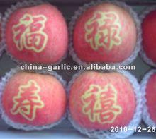 Chinese Fresh Gala Apples/Red Apple/Fuji Apple Price