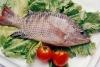 Frozen Tilapia Fish Farmed Seafood