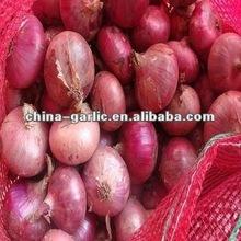 China 2012 Shallot Onion