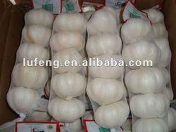 New Crop 2012 Chinese Fresh Garlic