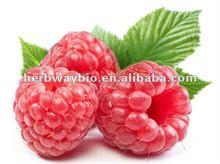 high quality of Raspberry extract powder,Rubus Chingii Hu P.E. 4:1