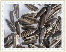 semi di girasole di alta qualità a righe