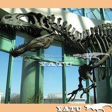 dinosaur skeleton model exhibition 2012