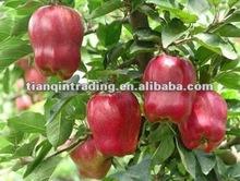 shandong fresh huaniu apple exporter