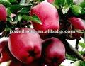 manzana de washington