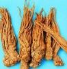 Angelica Extract 1% Ligustilide