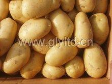2012 new Chinese yellow fresh potatoes