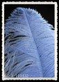 Decoración de la navidad azul de plumas de avestruz plumas