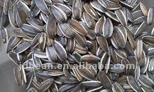 5.009 semi di girasole