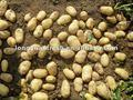 china congelados de patata