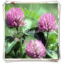 Red Clover Extract(Total Isoflavone2.5%-40%)