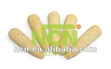 Frozen corn vegetable importers