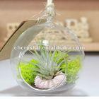 hand blow decor hanging glass ball, air plant glass terrarium