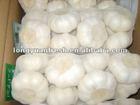 china cheap garlic