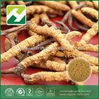 wild cordyceps sinenss extract 40% polysaccharide
