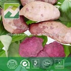 Purple sweet potato Extract Cyanidin acyl glucoside sweet potato buyers