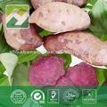 japanische purpurrote süße Kunden der süßen Kartoffel des Kartoffelextrakt-Cyanidinacylglukosids