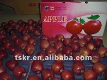 shandong golden apple green apple red apple