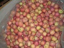 fuji apple 2012
