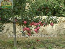 New season fresh fruit importers