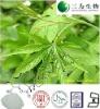 Sweet tea extract - 70%Rubusoside - 64849-39-4 - sweet tea for diabetes