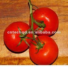 100% pure Fresh Tomato