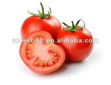 China Fresh Tomato
