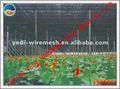 Fábrica! Caliente! Verde y de color blanco Net pepino / planta / sombrilla redes