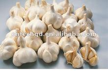 Superior Fresh/Organic/Nature Garlic for sale