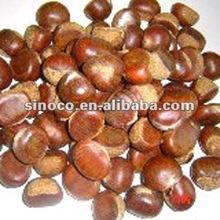 orgánicos secos de castaño de indias