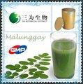 100% natural malunggay p. E. De 3 w fabricante