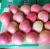 2012 qinguan apple(64/72/80/88/100/113/125 pieces/20kg ctn)