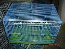 many birds in one bird cage