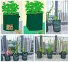Convenience Auto potato planter for family garden planting