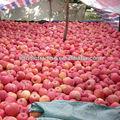 fresca de manzana fuji rojo