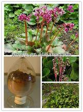 2012 New Arrival Bergenia crassifolia Extract