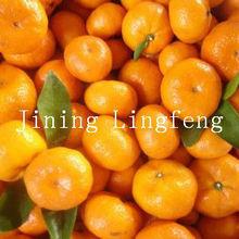 Chinese super quality baby mandarine 2012