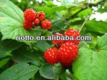 Palmleaf Raspberry Fruit P.E.(extract) with Raspberry Ketone and Ellagic acid