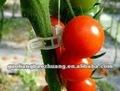 injerto de tomate con clips de primavera