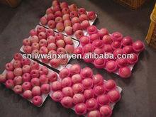 chinese fuji apple 2012 new season