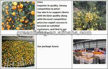 good price nanfeng baby mandarin orange (taste sweet)